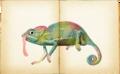 Chameleon por Beano.png
